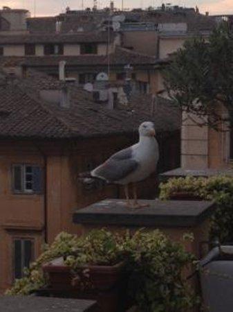 Albergo Cesari: Rooftop Deck Guest