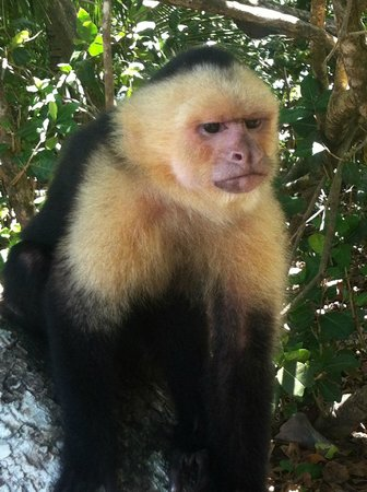 Gaia Hotel & Reserve: Friend I made at Manuel Antonio Nat'l Park