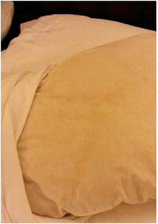 Hilton St. Louis Airport : Under the pillowcases, the pillows were dirty & stained