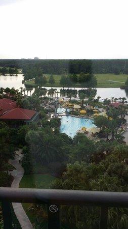 Hyatt Regency Grand Cypress : Pool and view.