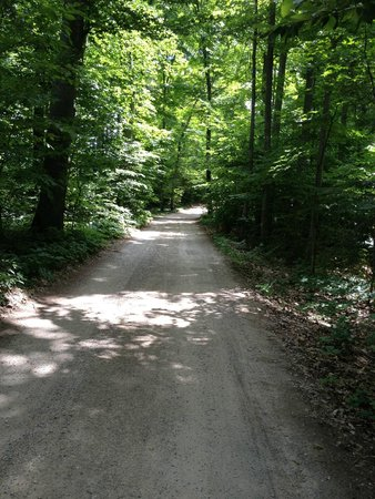 Long Lake: The Drive in through the woods. (Hasn't changed in 50 years!)