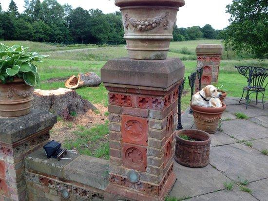 Hambledon House: Dog in Flowerpot