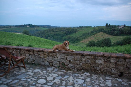 Borgo Argenina: A view overlooking the vines at the back of the B&B