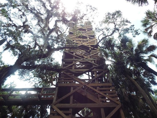 Myakka Canopy Walkway: the tower, 76ft up