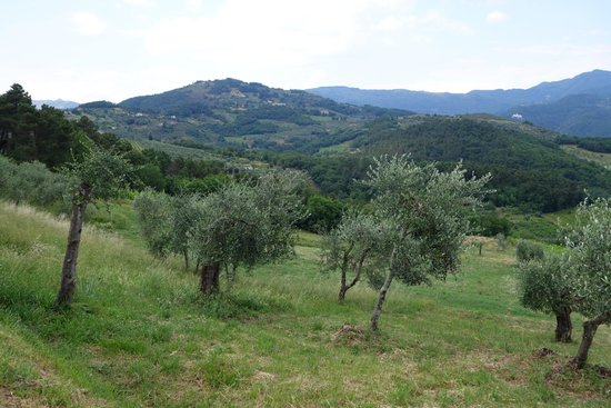 Suite Accommodation: olive trees on the property