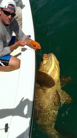 Florida Inshore Xtream Charters: 600 lb goliath grouper
