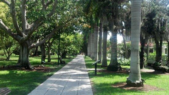 Edison & Ford Winter Estates : Royal Palms