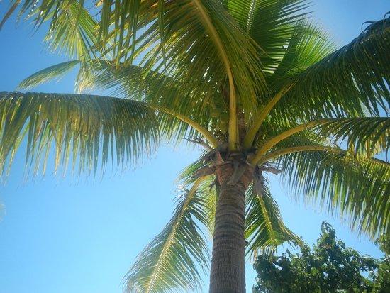 Mana Island Resort: Offering some shade on the beach