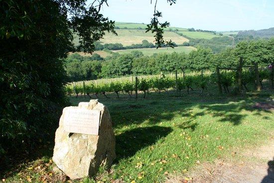 Camel Valley Vineyard: View of Annie's plot