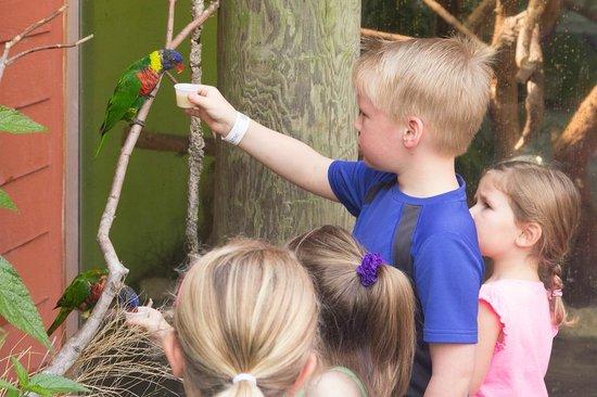 Riverbanks Zoo and Botanical Garden : Pretty Bird