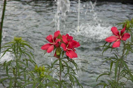 Riverbanks Zoo and Botanical Garden : Beautiful Flowers