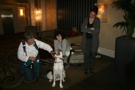 Kimpton Alexis Hotel: Harrison the dog! (Head of Complaints)