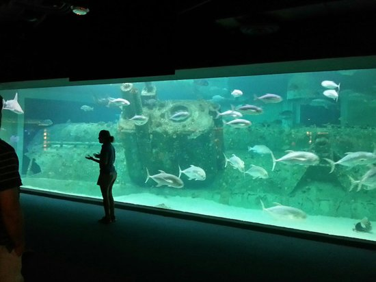 North Carolina Aquarium at Pine Knoll Shores: Feeding time
