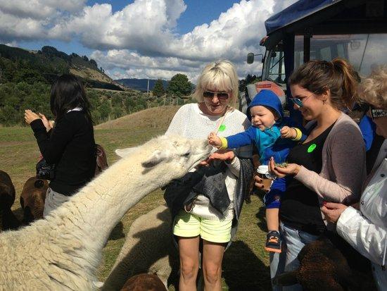 Tour Zealand Tours : Agrodome Farm Tour