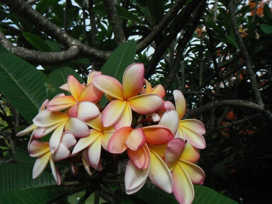 Little Princess Estate : Flowers on the estate