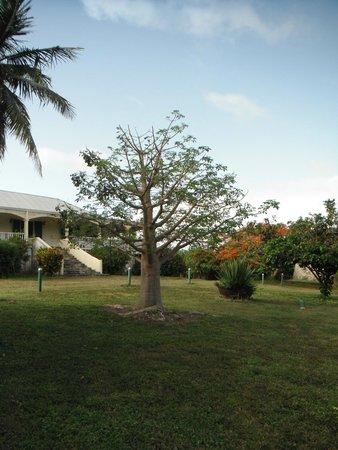 Little Princess Estate : Front yard
