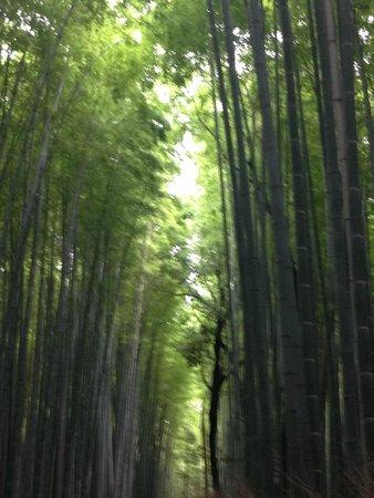 Tenryuji Temple: 竹林