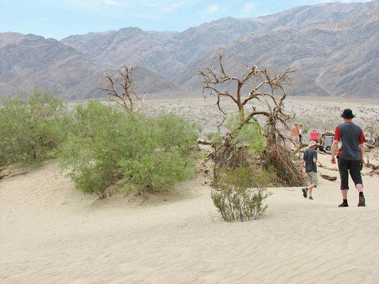Mesquite Flat Sand Dunes: great vistas