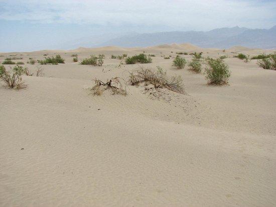 Mesquite Flat Sand Dunes: a barren world - or so it seems