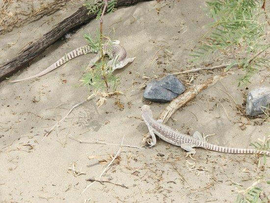 Mesquite Flat Sand Dunes: blending in