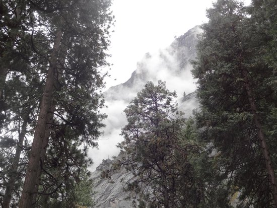 Half Dome Village : This was the view from our hard-sided cabin in Curry Village.