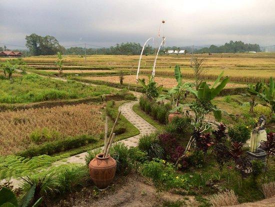 Bali silent retreat : My daily breakfast view