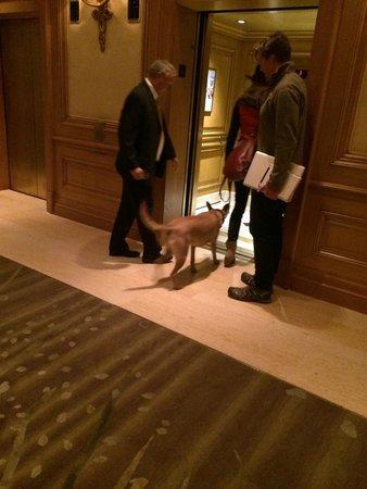 Four Seasons Hotel Las Vegas: Animais são bem vindos no Four Seasons