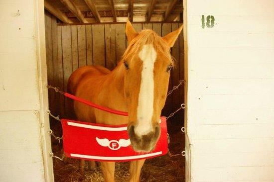 Churchill Downs : Skippy the Oh so calm lead horse.