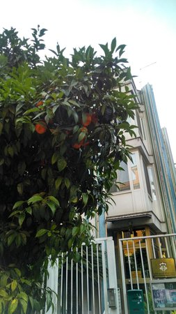 Hotel Principe Torlonia: Rua arborizada e com frutas