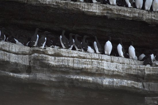 O'Brien Line Ferries : These birds were everywhere & nest right on the rocks