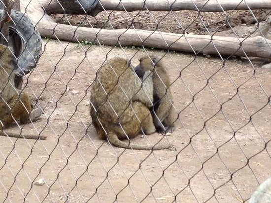 Seneca Park Zoo: Baboons