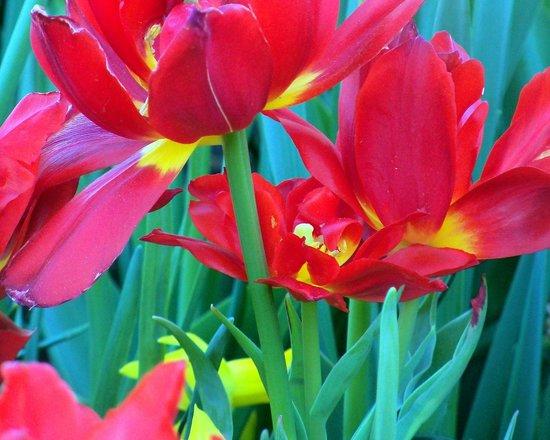 Paul J Ciener Botanical Garden: Photo by Jessica st Lewis at Paul J. Ciener Botanical Garden in Kernersville, NC