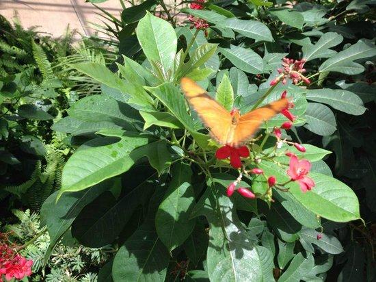 Butterfly Wonderland: Orange you glad you came?
