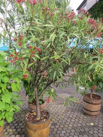 Landgasthof Wellmann: a lot of beautiful plants in the garden