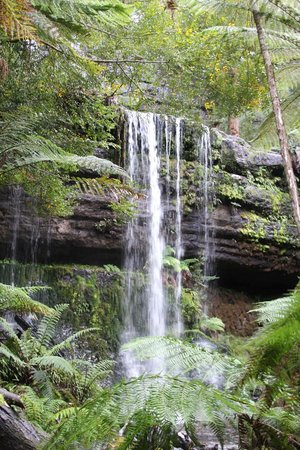Mount Field National Park 사진