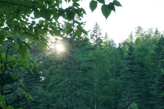 Judge C.R. Magney State Park: Sunset at Magney State Park