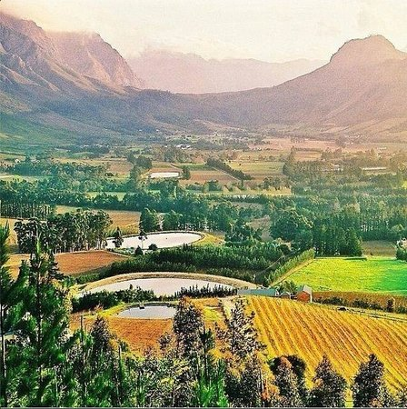 The Bay Atlantic Guest House: Our beautiful Winelands !!