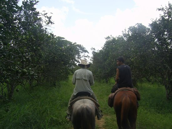 Outback Trails: Riding back through the orchard.