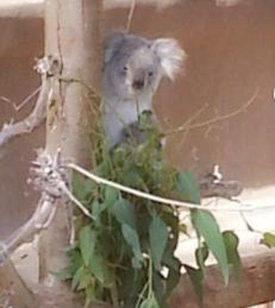 San Diego Zoo : So Cute!