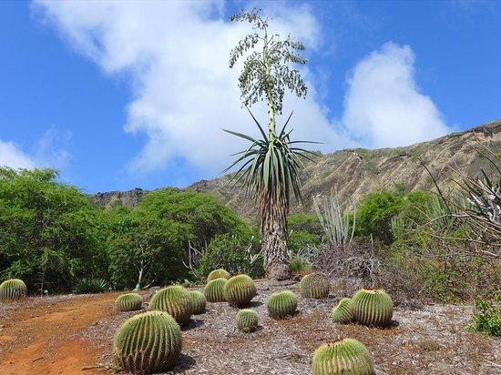 Koko Crater Botanical Garden: サボテン