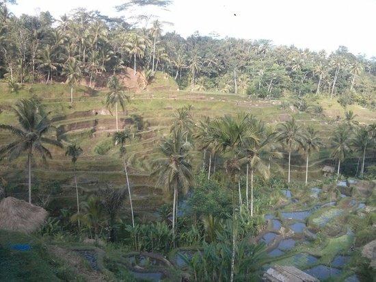 Tegalalang Rice Terrace: Moooooi