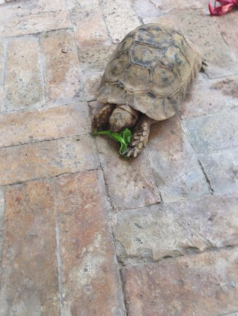 Ryad Mabrouka : one of the sweet turtles that live here in the gardens