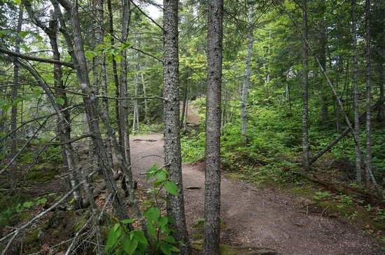 Temperance River State Park : Hiking trail