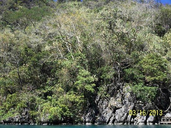 Kayangan Lake : Trees