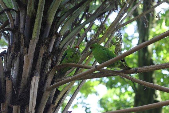 Otorohanga Kiwi House & Native Bird Park: Feed the birds