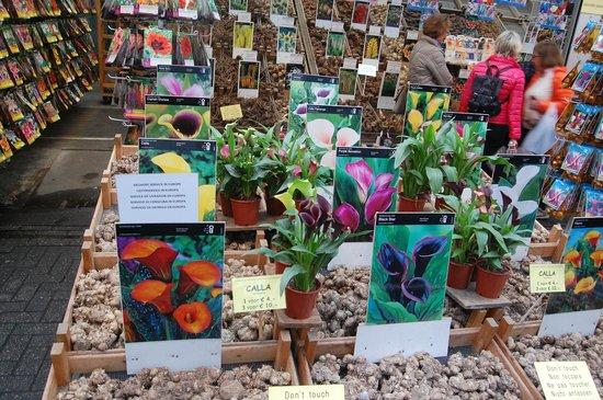Flower Market / Bloemenmarkt : Каллы