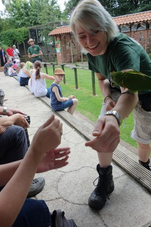 Tropical Butterfly House, Wildlife & Falconry Centre: Parakeets accept coin donations from spectators