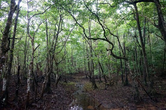 Marrdja Botanical Walk: rain forest