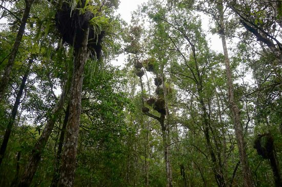 Marrdja Botanical Walk: trees with roots in the air