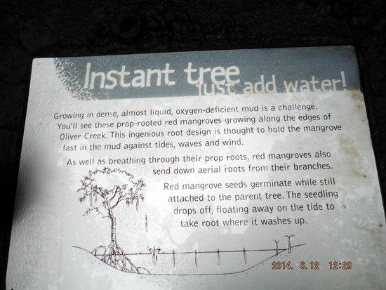 Marrdja Botanical Walk: educational signs about mangroves